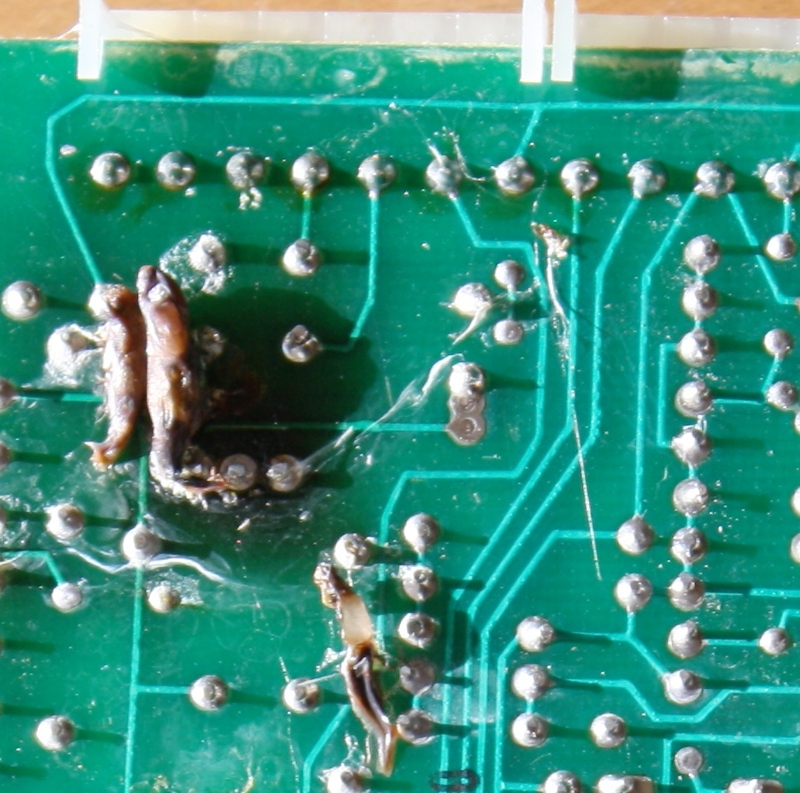 Gate controller board infested with cocoons